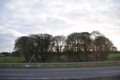 Δαχτυλίδι των δέντρων στοκ εικόνα με δικαίωμα ελεύθερης χρήσης
