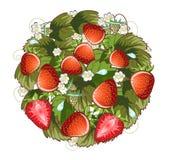 Δαχτυλίδι φραουλών Στοκ Φωτογραφίες