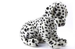 Δαλματικό σκυλί βελούδου Στοκ Φωτογραφία