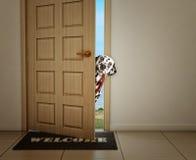 Δαλματικό σκυλί που περιμένει κοντά στην πόρτα με το λουρί δέρματος, έτοιμο να πάει για έναν περίπατο με τον ιδιοκτήτη του Στοκ φωτογραφία με δικαίωμα ελεύθερης χρήσης