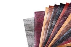 Δείγματα χρώματος του διαφορετικού δέρματος Στοκ Φωτογραφίες