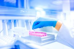 Δείγμα εκμετάλλευσης χεριών επιστημόνων στο ειδικό εργαστήριο, ιατρικό περιβάλλον, λεπτομέρειες νοσοκομείων Στοκ Εικόνες