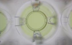 δείγμα καλά κίτρινο Στοκ Φωτογραφίες