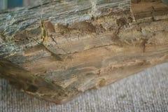 Δείγμα λιγνίτη ή καφετιού άνθρακα Ο λιγνίτης είναι ένα μαλακό καφετί combusti στοκ φωτογραφίες με δικαίωμα ελεύθερης χρήσης