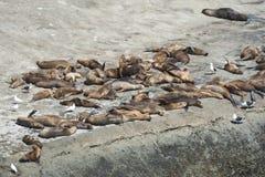 Δείτε τα λιοντάρια στη χερσόνησο Valdes στοκ εικόνα με δικαίωμα ελεύθερης χρήσης