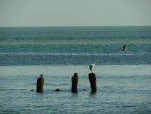 Δείτε τα πουλιά κάθεται στον οξυδωμένο πόλο θάλασσας στη θάλασσα μακριά Στοκ εικόνα με δικαίωμα ελεύθερης χρήσης