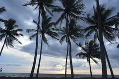 Δείτε την άποψη ηλιοβασιλέματος κοντά στο δέντρο καρύδων στοκ εικόνα με δικαίωμα ελεύθερης χρήσης