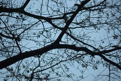 Δείτε τον ουρανό μέσω του μεγάλου κλώνου δέντρων στοκ εικόνες