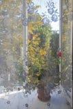 Δείτε το ανοικτό παράθυρο μέσω της διαφανούς κουρτίνας Στοκ Εικόνες