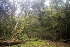 Δείτε το αρχικό τροπικό δάσος, ηλέκτρινο βουνό, Μαδαγασκάρη Στοκ φωτογραφία με δικαίωμα ελεύθερης χρήσης