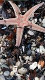 Δείτε το αστέρι Στοκ Εικόνες