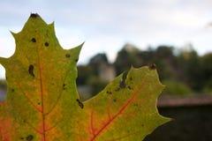 Δείτε το φθινόπωρο σε μια μεγάλη λεπτομέρεια στοκ εικόνες
