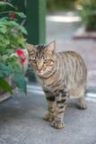 Δειγμένη γάτα Στοκ εικόνες με δικαίωμα ελεύθερης χρήσης