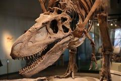 δεινόσαυρος στοκ εικόνα