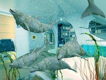 δελφίνια εσωτερικά διανυσματική απεικόνιση