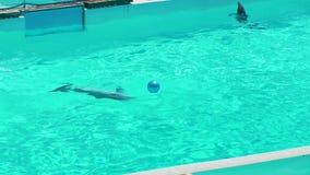 Δελφίνια που πηδούν από το νερό σε σε αργή κίνηση φιλμ μικρού μήκους
