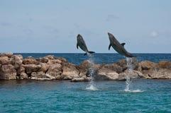 δελφίνια που πηδούν δύο Στοκ Εικόνες