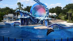 Δελφίνια που πηδούν σε Seaworld 1 φιλμ μικρού μήκους