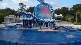 Δελφίνια που πηδούν στην επίδειξη σε Seaworld φιλμ μικρού μήκους