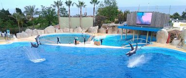 Δελφίνια σε Marineland Αντίμπες στοκ φωτογραφία
