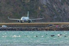Δελφίνια στον αερολιμένα της Νέας Ζηλανδίας Ουέλλινγκτον Στοκ Εικόνες