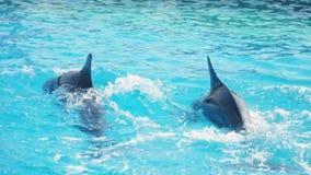 δελφίνια απόθεμα βίντεο
