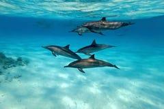 δελφίνια Στοκ Φωτογραφία