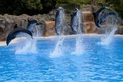 δελφίνια Στοκ εικόνα με δικαίωμα ελεύθερης χρήσης