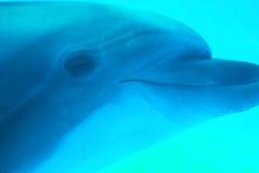 δελφίνι εύθυμο Στοκ εικόνα με δικαίωμα ελεύθερης χρήσης