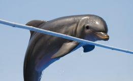 δελφίνι μπουκαλιών που μυρίζεται Στοκ φωτογραφία με δικαίωμα ελεύθερης χρήσης