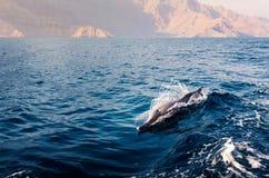 δελφίνι που αυξάνεται επάνω από το κρύσταλλο - καθαρίστε το νερό στοκ εικόνα