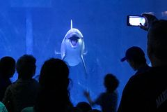 Δελφίνι στο ενυδρείο στοκ φωτογραφίες με δικαίωμα ελεύθερης χρήσης