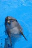 δελφίνι Στοκ Φωτογραφίες