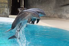 δελφίνι Στοκ εικόνες με δικαίωμα ελεύθερης χρήσης