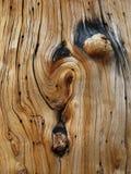 δεμένος κορμός πεύκων Στοκ Εικόνες