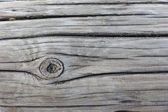 δεμένο δάσος Στοκ φωτογραφία με δικαίωμα ελεύθερης χρήσης