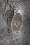 δεμένο παλαιό δάσος Στοκ φωτογραφία με δικαίωμα ελεύθερης χρήσης