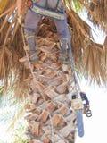 Δενδροκόμος επάνω στο δέντρο Στοκ φωτογραφία με δικαίωμα ελεύθερης χρήσης