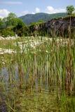 δενδρολογικός κήπος Στοκ Εικόνες