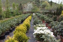δενδρύλλια λουλουδιώ& Στοκ εικόνες με δικαίωμα ελεύθερης χρήσης