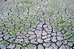 Δενδρύλλιο στην ξηρά λάσπη. στοκ εικόνες