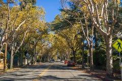Δενδρώδης οδός σε μια κατοικημένη γειτονιά μια ηλιόλουστη ημέρα φθινοπώρου στοκ φωτογραφία με δικαίωμα ελεύθερης χρήσης