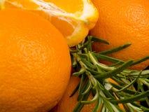 δεντρολίβανο πορτοκαλ& Στοκ φωτογραφίες με δικαίωμα ελεύθερης χρήσης