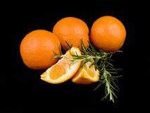 δεντρολίβανο πορτοκαλ& Στοκ Εικόνα