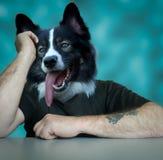 Δεν είναι παρά ένα τρυπημένο σκυλί κυνηγόσκυλων στοκ εικόνες με δικαίωμα ελεύθερης χρήσης