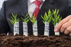 Δενδρύλλια εκμετάλλευσης επιχειρηματιών που καλύπτονται με το αμερικανικό δολάριο Στοκ φωτογραφία με δικαίωμα ελεύθερης χρήσης