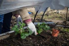 Δενδρύλλια των earthlings στο θερμοκήπιο Στοκ φωτογραφία με δικαίωμα ελεύθερης χρήσης