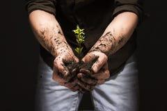 Δενδρύλλιο με τη γη στους φοίνικες ατόμων ` s, νέα ζωή Στοκ φωτογραφία με δικαίωμα ελεύθερης χρήσης