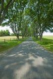 Δενδρώδες driveway στην χορτοτάπητας-ορεινή περιοχή τέφρας, σπίτι του Προέδρου James Monroe, κομητεία Albemarle, Βιρτζίνια Στοκ φωτογραφίες με δικαίωμα ελεύθερης χρήσης