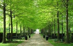 Δενδρώδης διάβαση πεζών κήπων Στοκ Φωτογραφίες